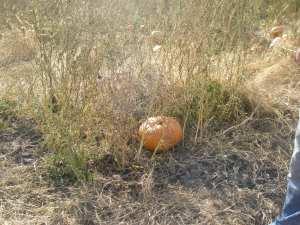 Pumpkin Hiding